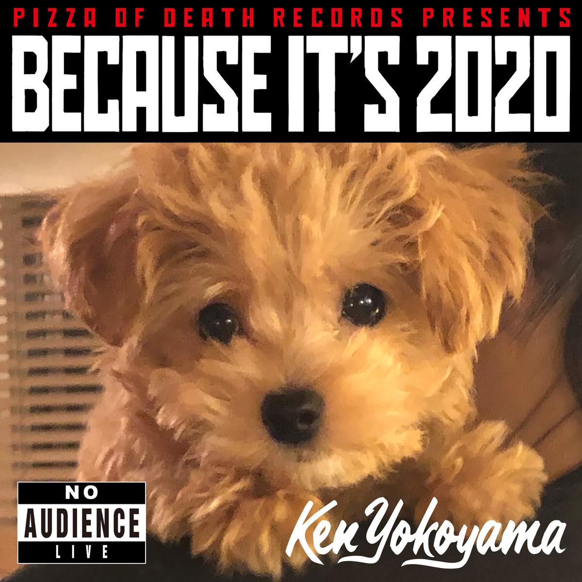 BECAUSE IT'S 2020 / Ken Yokoyama ジャケット画像